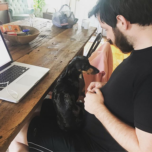 Greg is getting some pawfessional help on his thesis writing today from @sproutthedachshund  #writingbuddy #pawfessional #dailysprout #sleepypuppy