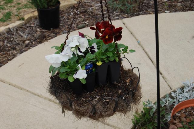 flowers to plant.jpg