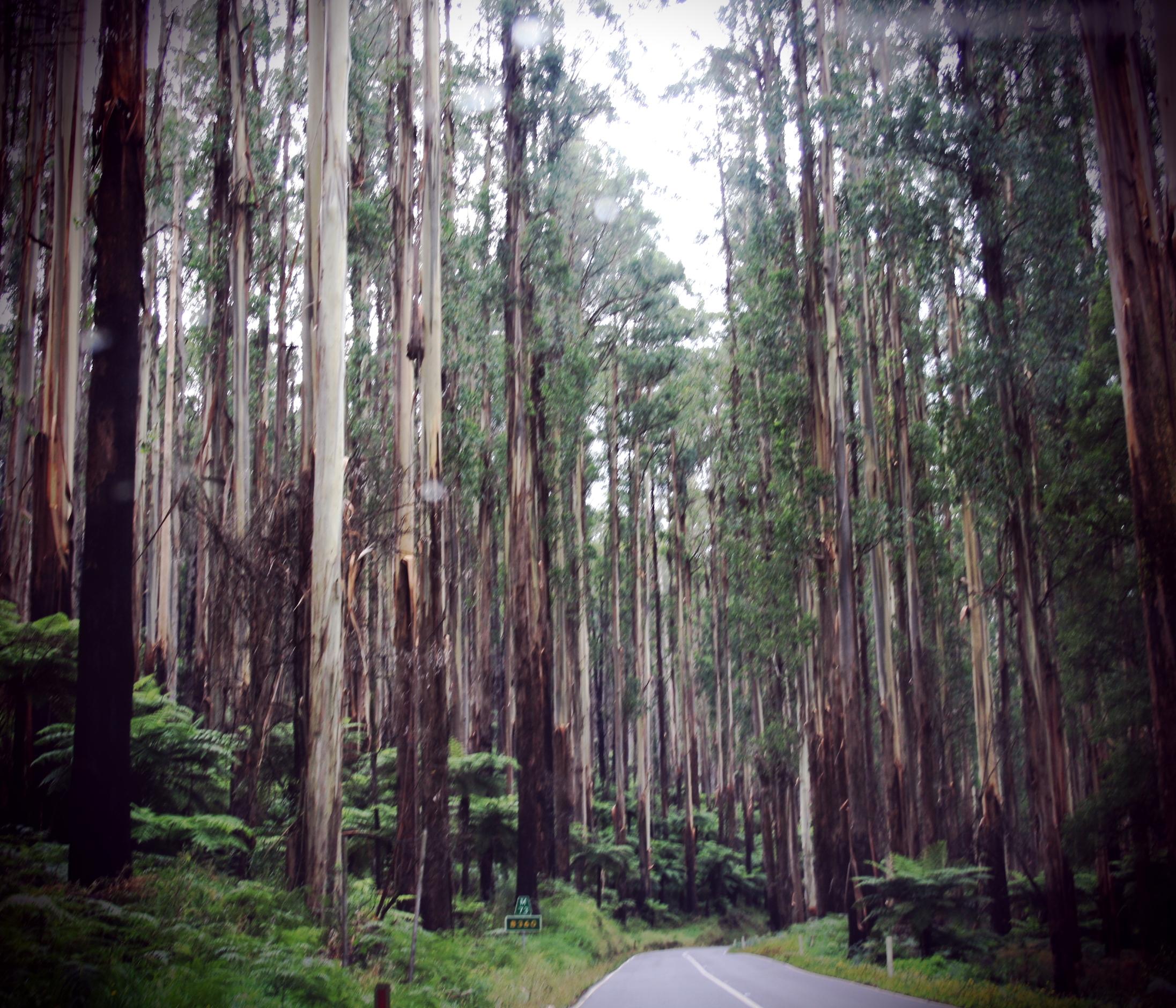 healesville scenic drive.jpg