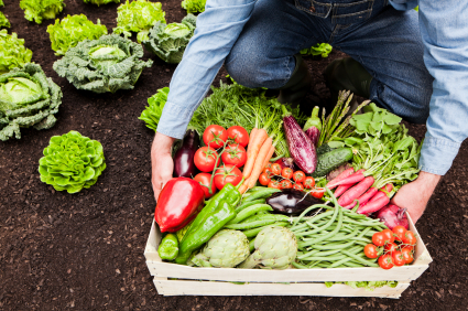 Farm to Table Ingredients