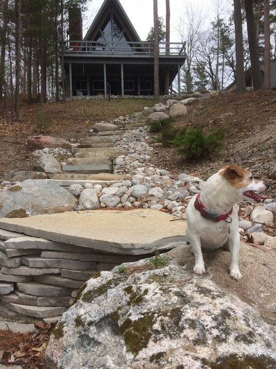 stone steps a rustic house and a small dog