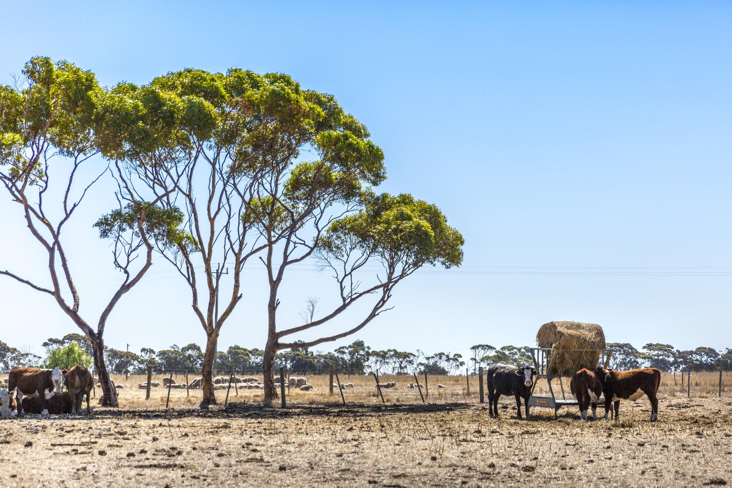 Farm_1_(www.matthoustonphotography.com)-5.jpg