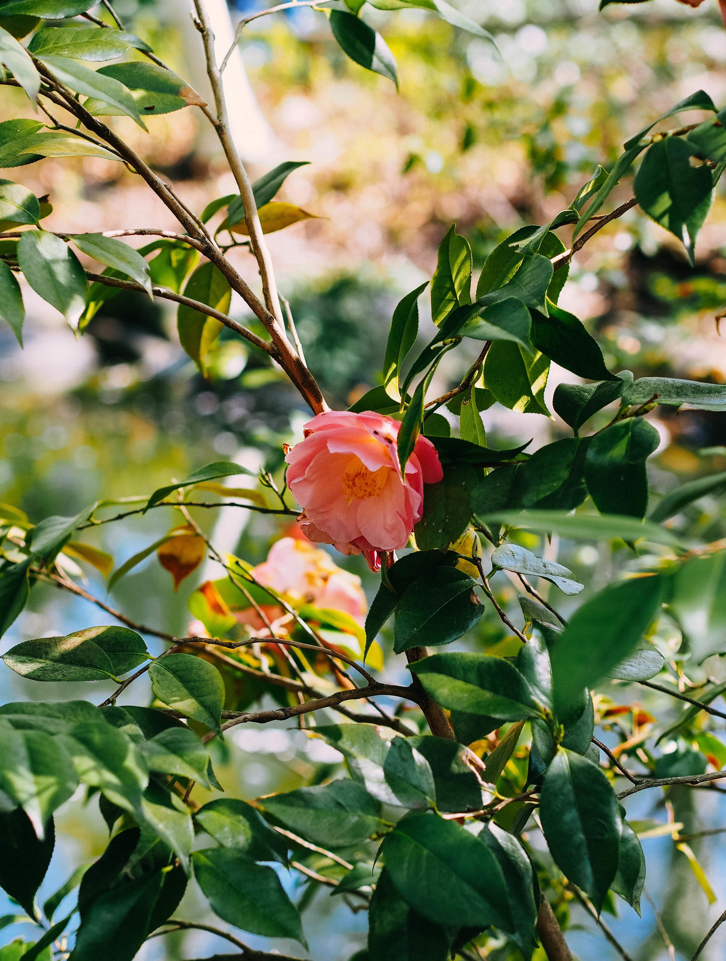 Brooklyn Botanic (Garden) Beauty -- 1/320 sec. f/2.5