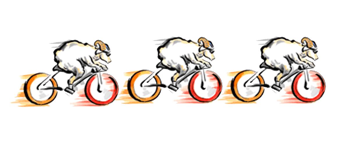cycling sheep.jpg