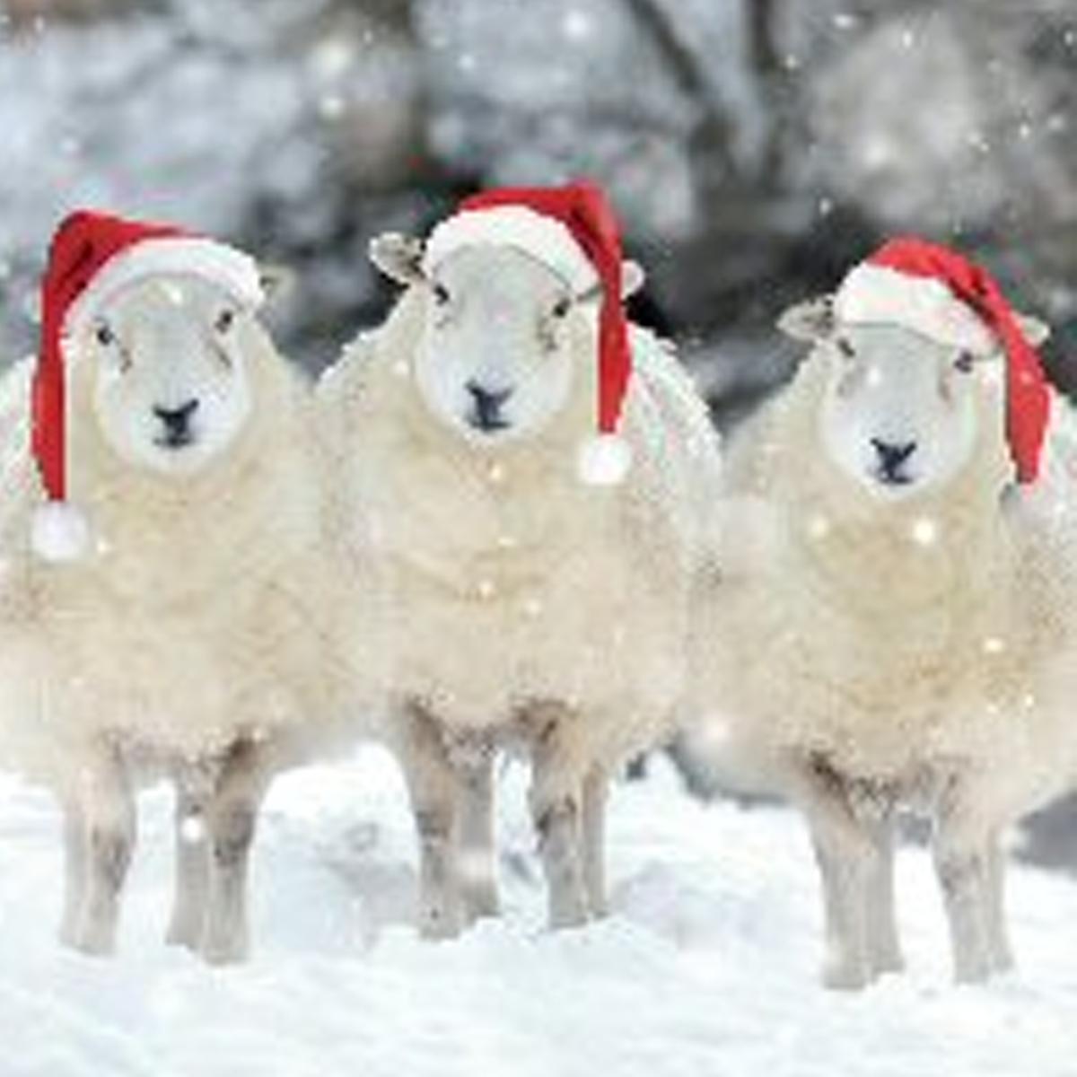 3 sheep santa hats.jpg
