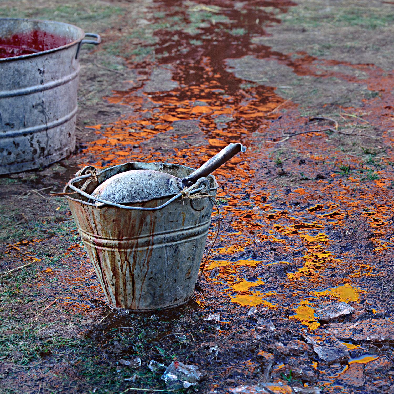 Hink-Grisslakt-Röd-spegling-i-skållvatten-fr-vägg--Hycklinge-1995-11-On-CRP2-1500px KN.jpg
