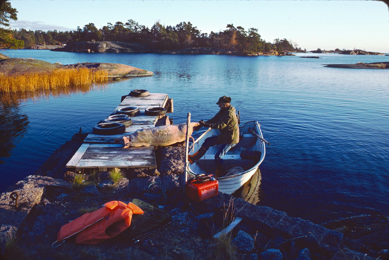 Björn-drar-gris-på-bga-ner-i-båt-1980-1500px-KN.jpg