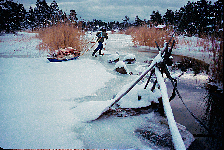 Björn-drar-pulka-vid-vak-198001-1500px-KN.jpg