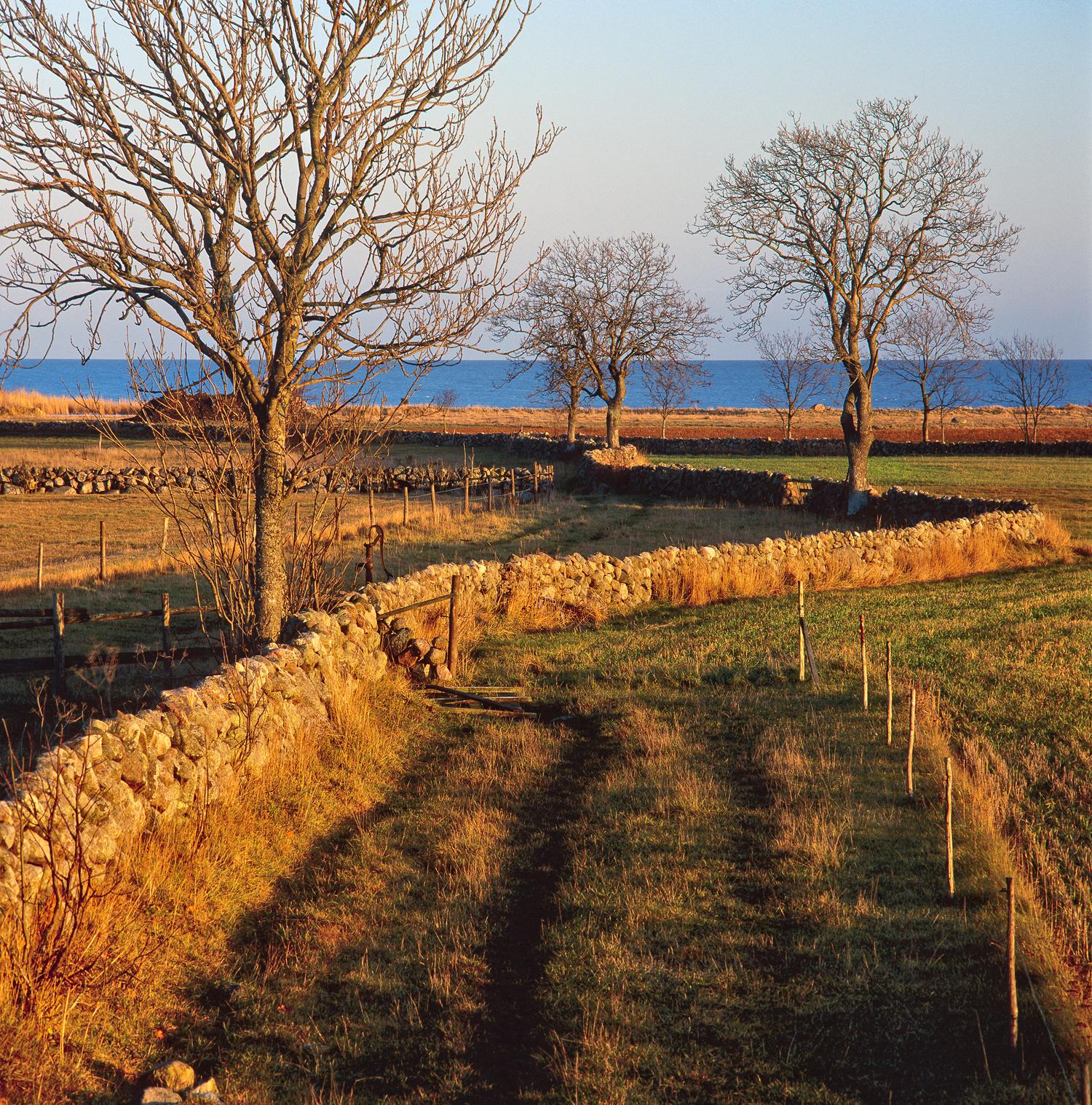 Ringlande-stenmur-mot-havet-Askar-Honungstorp-Öland-1995-11-On-1500px.jpg