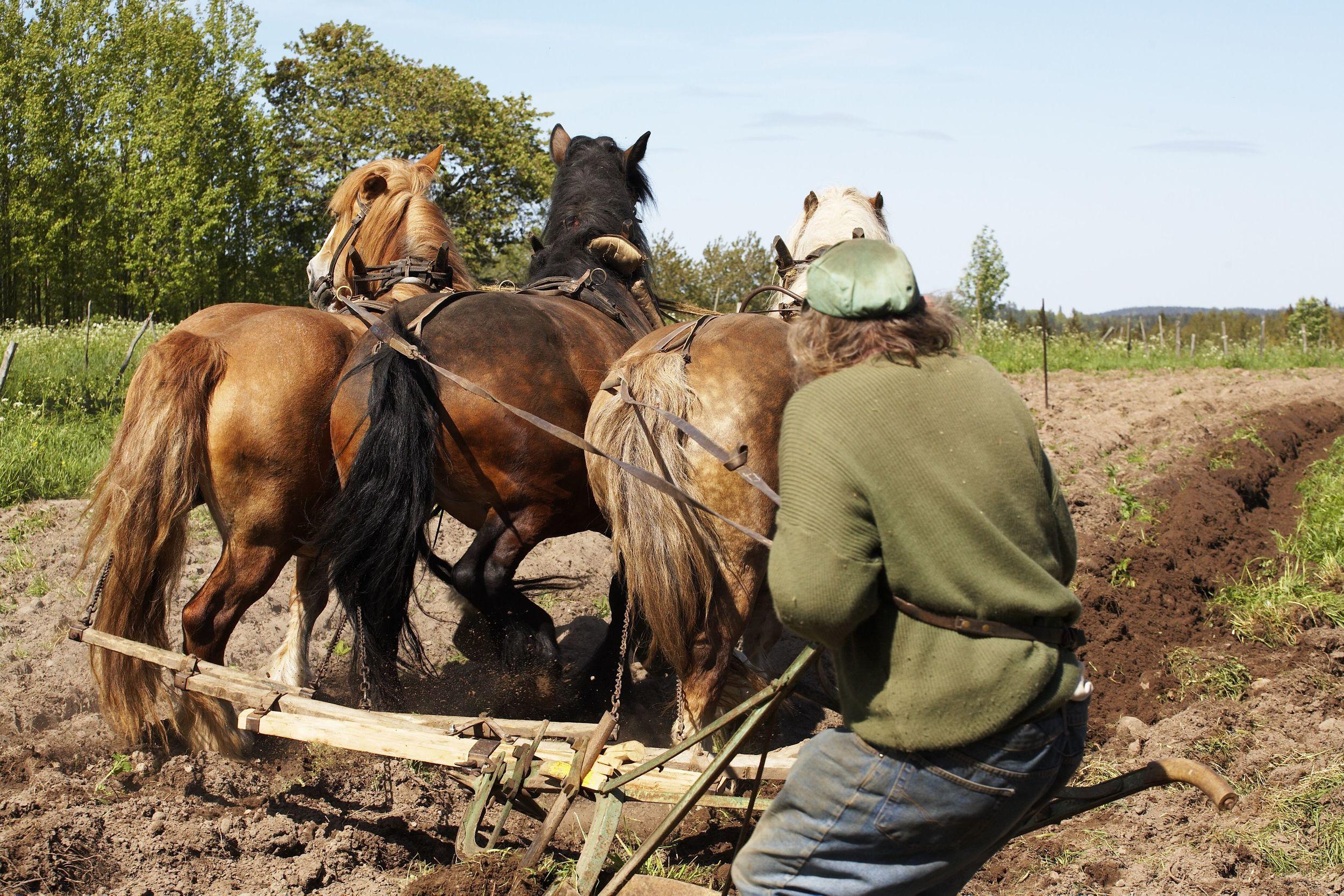 _MG_7765 Hästar sväng plöjn-3.jpg
