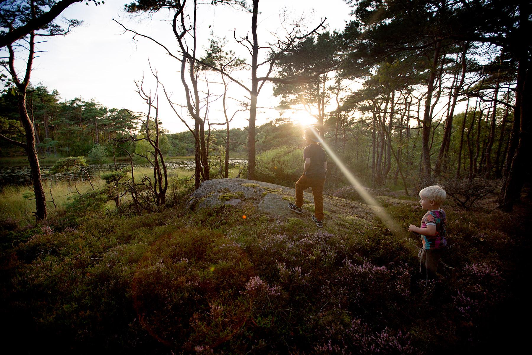 blogg-170816taltaiskogen10.jpg