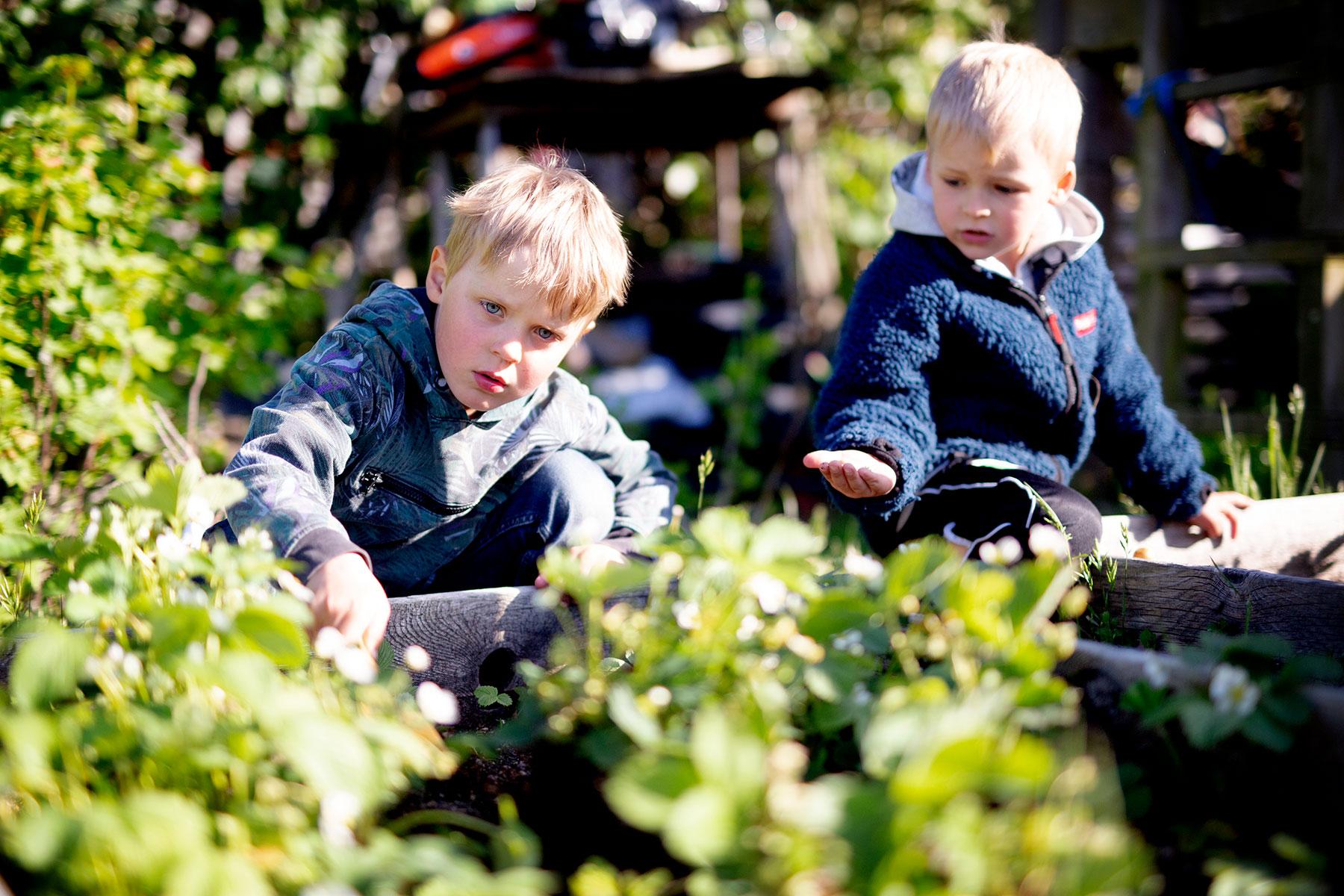 blogg-190528bertilplanterar10.jpg