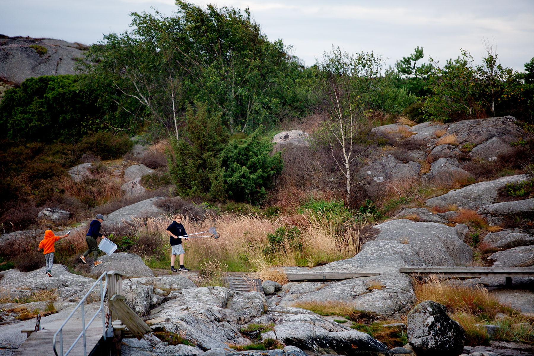blogg-190707orreviken15.jpg