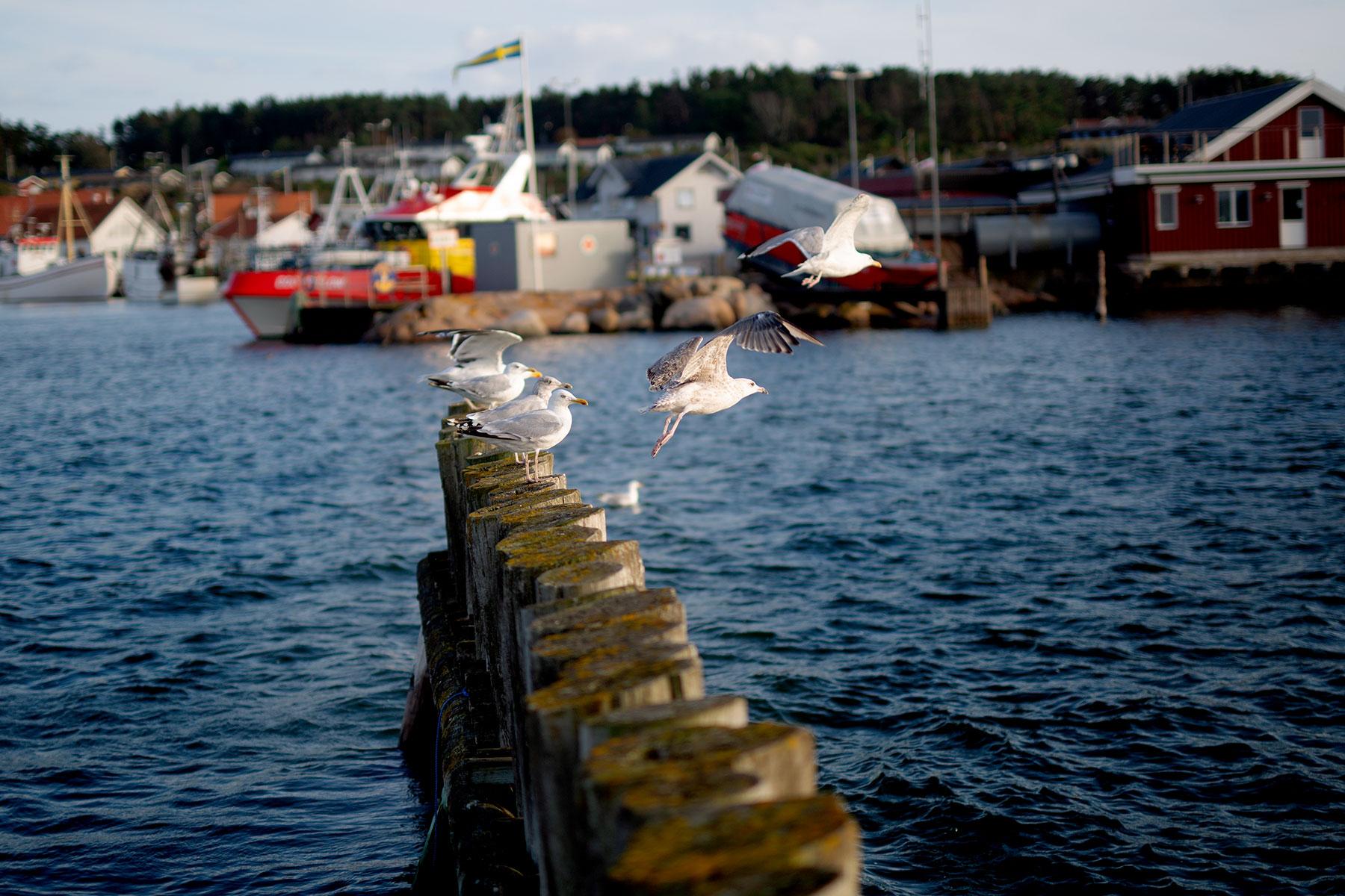 blogg-190811hamnen6.jpg