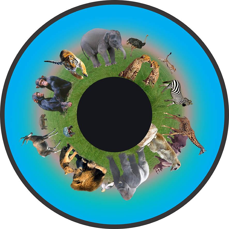 optikinetics-animals-fg7423.jpg