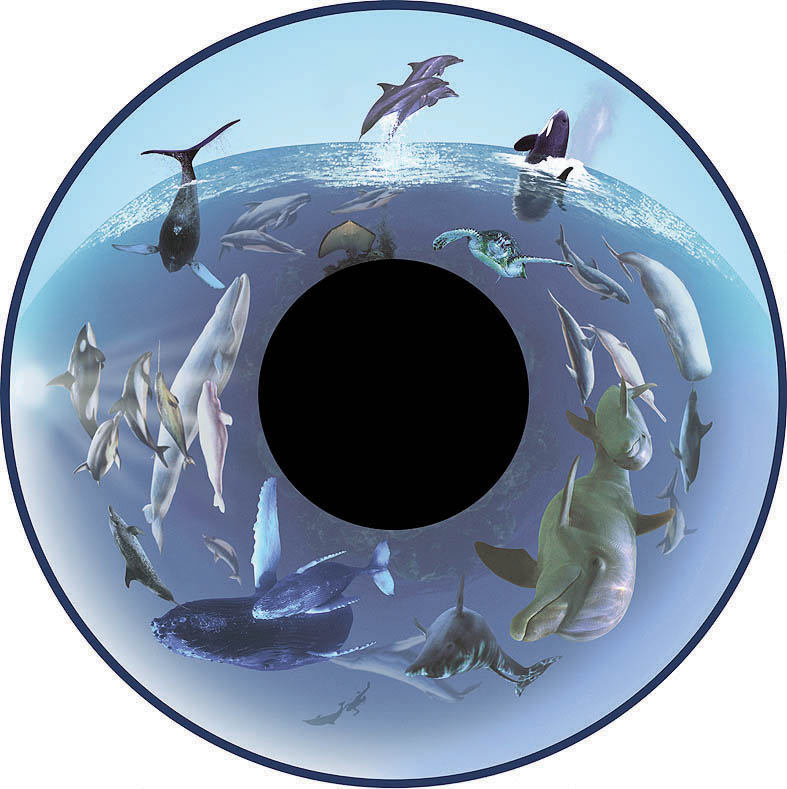 optikinetics-whales-fg7260.jpg