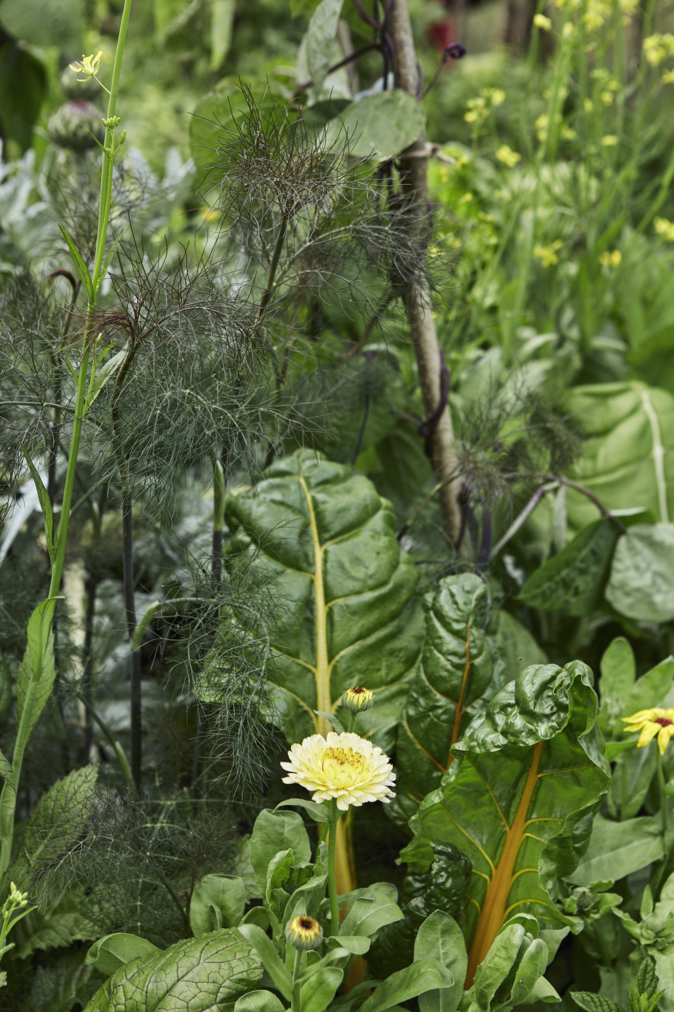Belmond Enchanted Gardens 2017_0983.jpg