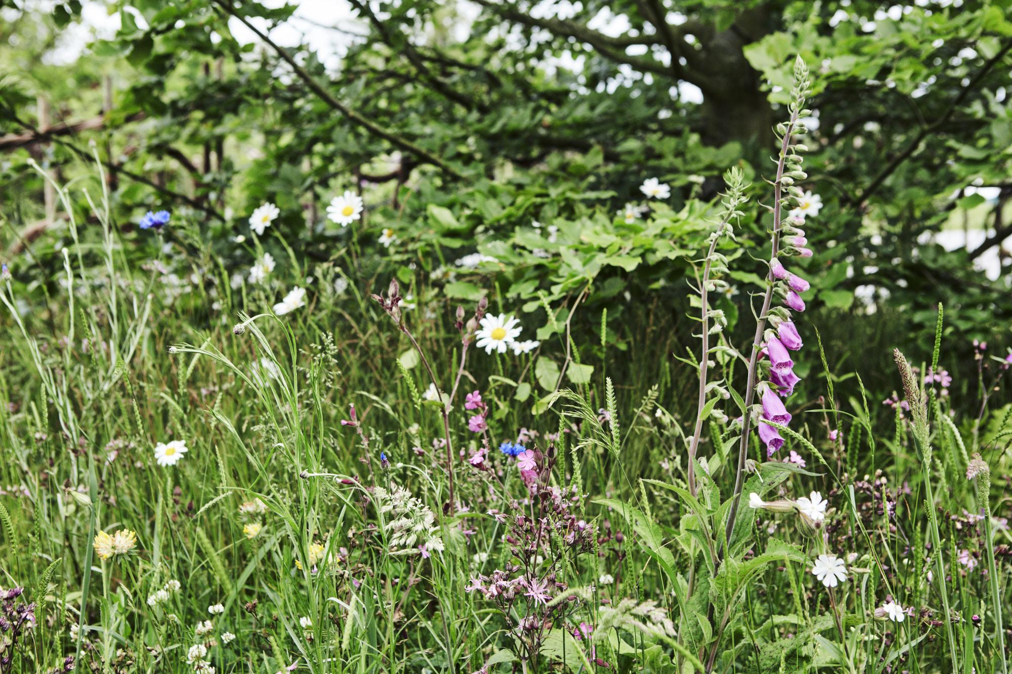 Belmond Enchanted Gardens 2017_0212.jpg