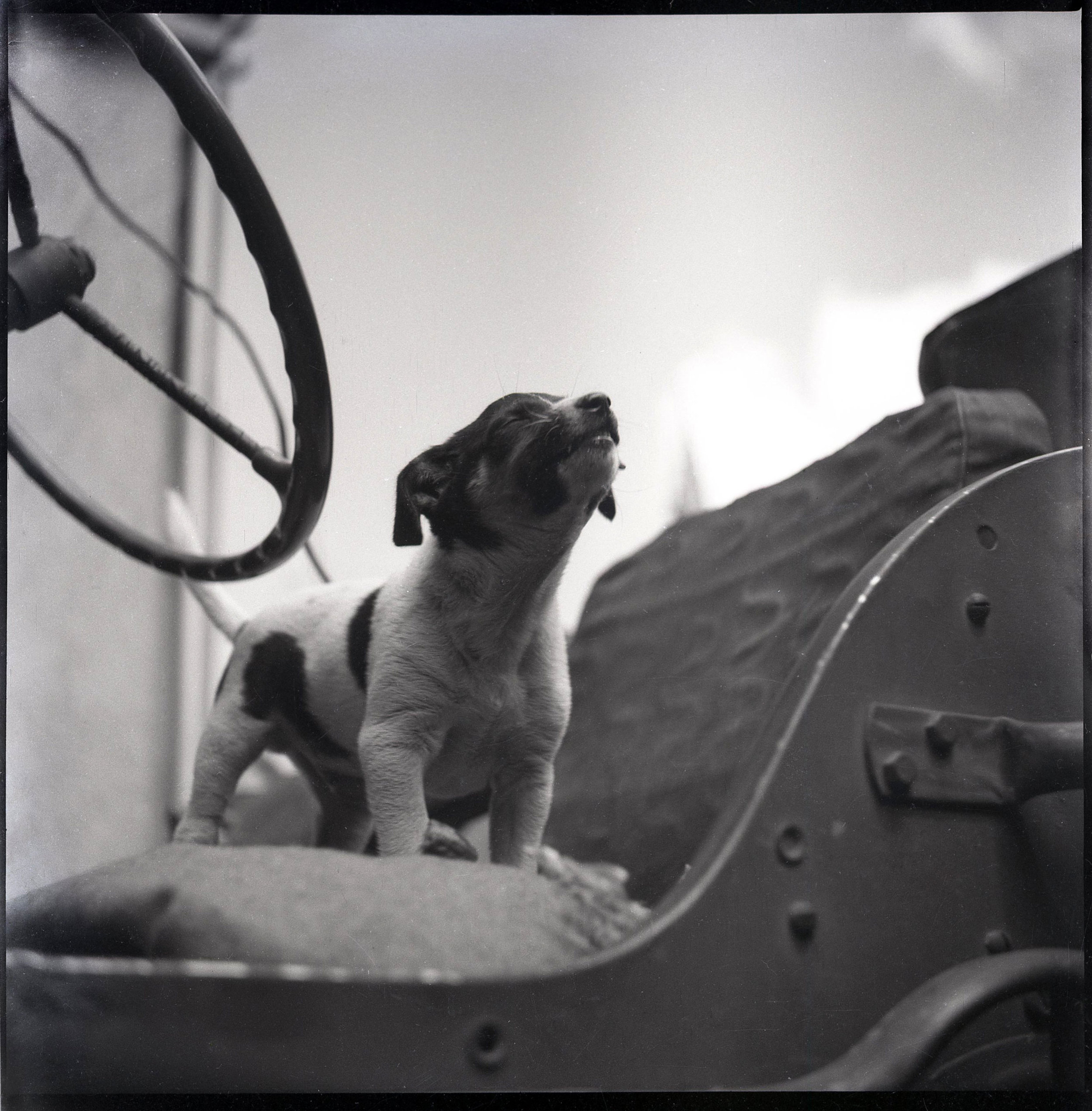 File this one under Archival Pups. B&W Photograph. Approximately 1955.  Found in Raleigh, NC