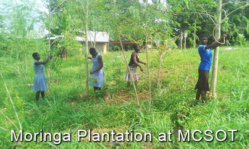 14.Moringa.Plantation.jpg