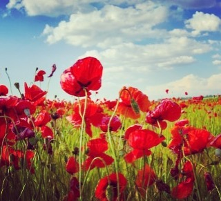 This Sunday please take time to remember those who have died for our freedom.  In Flanders fields the poppies blow  Between the crosses, row on row,  That mark our place; and in the sky  The larks, still bravely singing, fly Scarce heard amid the guns below.  We are the Dead. Short days ago We lived, felt dawn, saw sunset glow,  Loved and were loved, and now we lie  In Flanders fields.  Take up our quarrel with the foe: To you from failing hands we throw  The torch; be yours to hold it high.  If ye break faith with us who die We shall not sleep, though poppies grow  In Flanders fields. #remember #remembranceday #thankyou #gratitude #grateful #letusnotforget #canada #ampyoucan #amputeecoalitionofbc #respect #alwaysremembered #letusnotforget