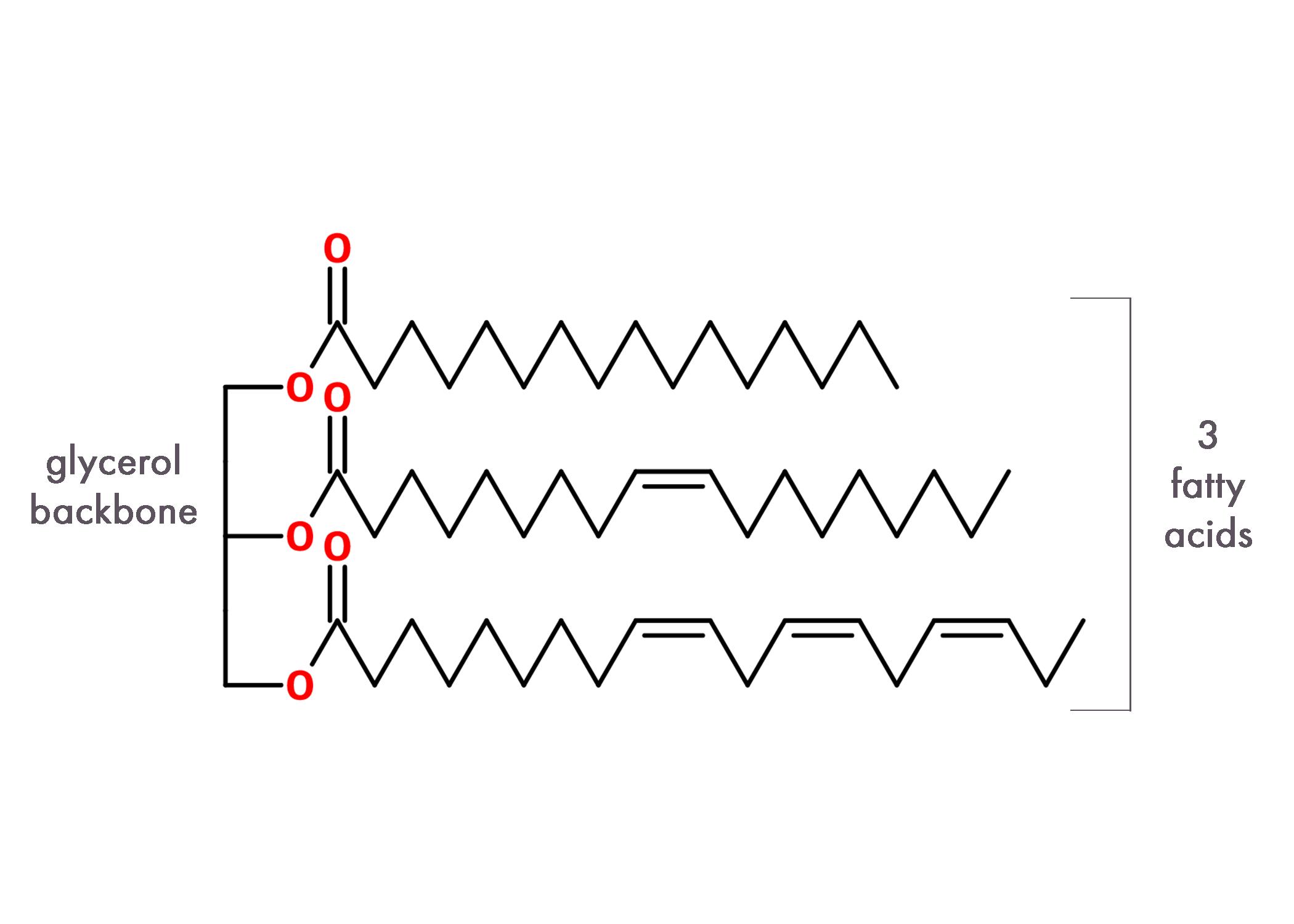 Figure 9. General structure of a triglcyeride