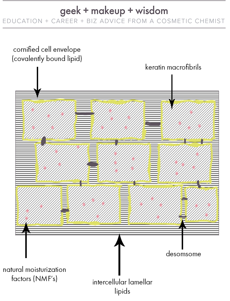 Figure 1. Stratum corneum structure. The yellow boxes represent corneocytes embedded in a matrix of interceullar lamellar lipids.