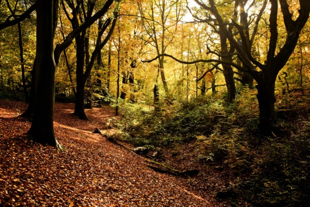 Case in point: the very first image in a google search for Suffolk in Autumn is this gorgeous shot at Piper's Hill. Photographer: Paul Lane