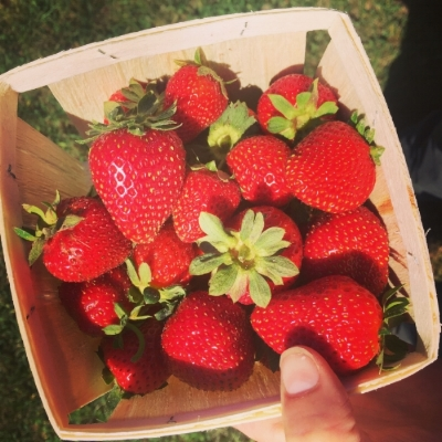 Some early 'Albion' fruit from UNH's Woodman Farm in Durham, NH