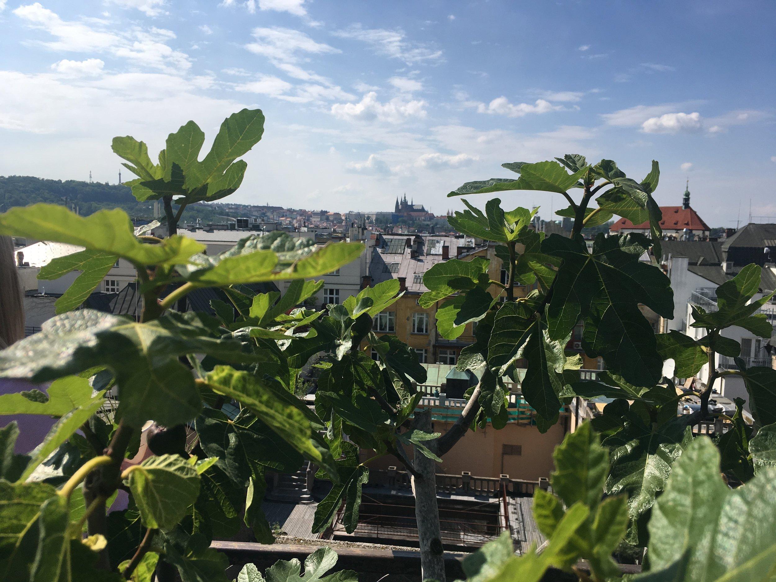 Haenke_Rooftop_UrbanBotanics