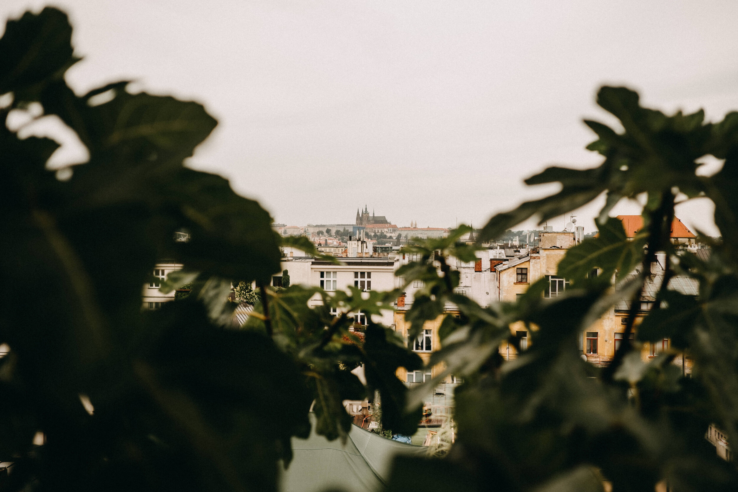 Lucerna Palace Rooftop - Five gardens. Six trees. Tens of herbs and edible plants. All for the benefit of both human and animal inhabitans of the city._ Střecha Lucerny, 2018 - 2019