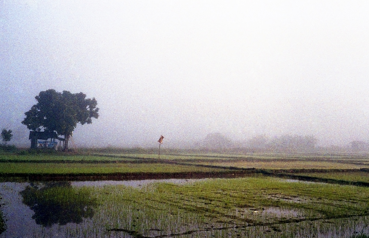 Normal Nuances:  Rice Field  Film Photography, 17x11 in., 2018