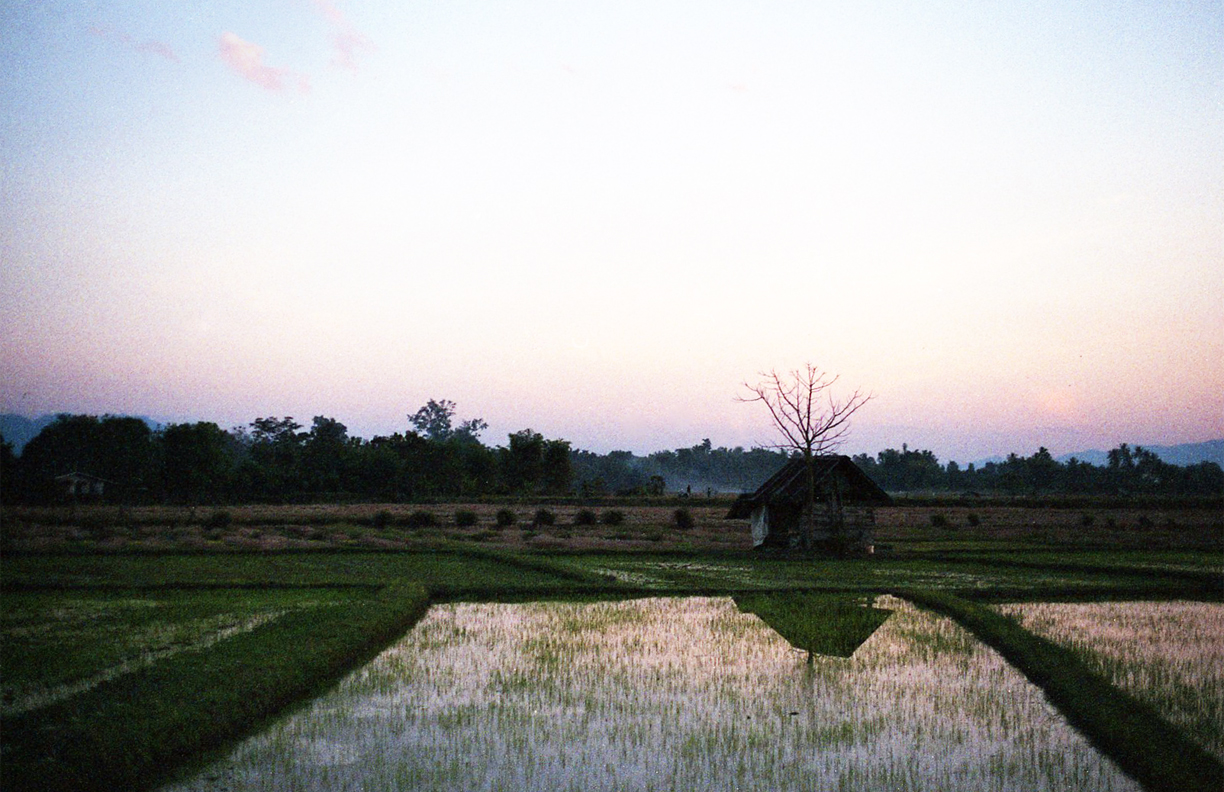 Normal Nuances: Phrao Rice Field   Film Photography, 17x11 in., 2018