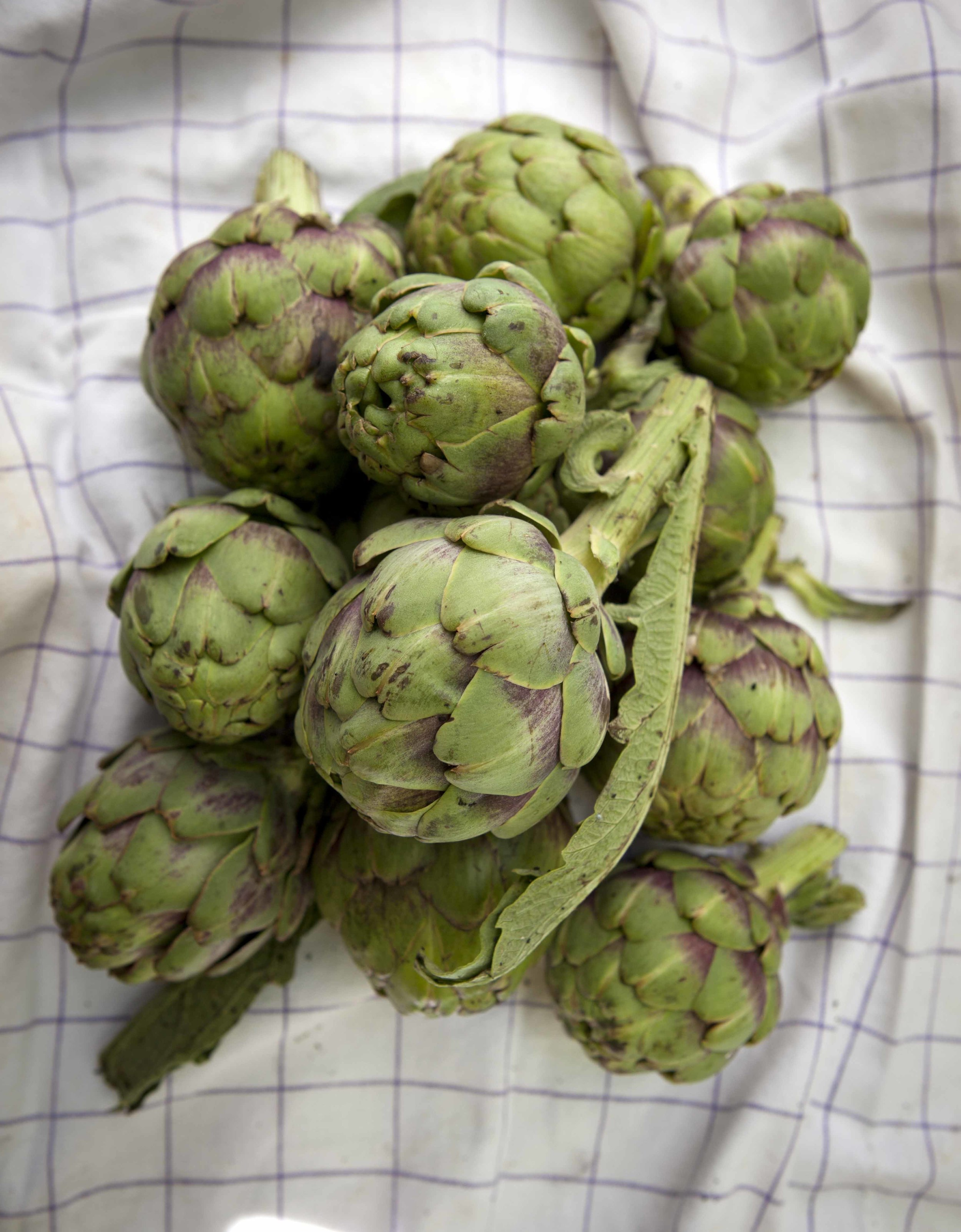 Artichokes for the cookery course near Seville