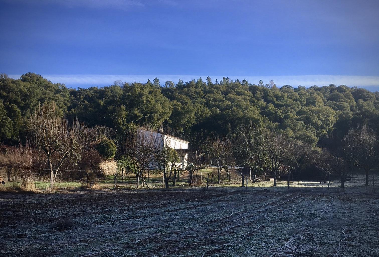 Wintermorgens im Obstgarten. Blick auf das Haus Platero.