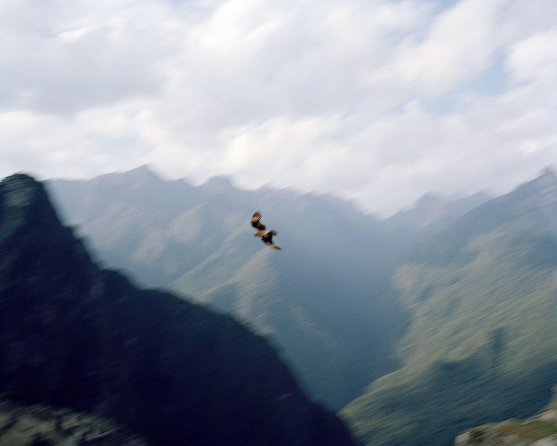 Julian-Ward-Condor-Peru.jpg
