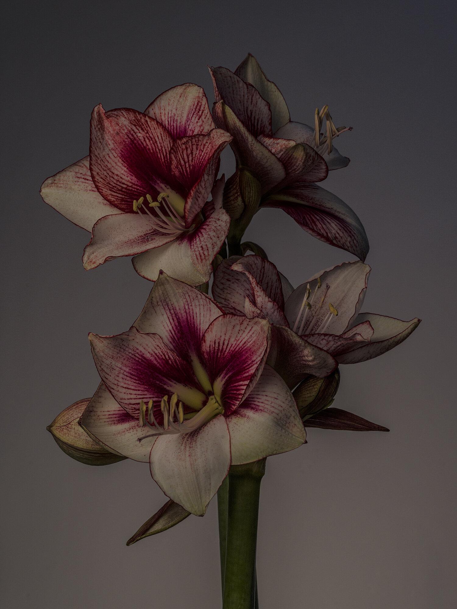 Julian-Ward-FlowerBx.jpg