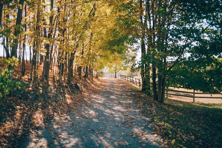 Fall+Pathway.jpg