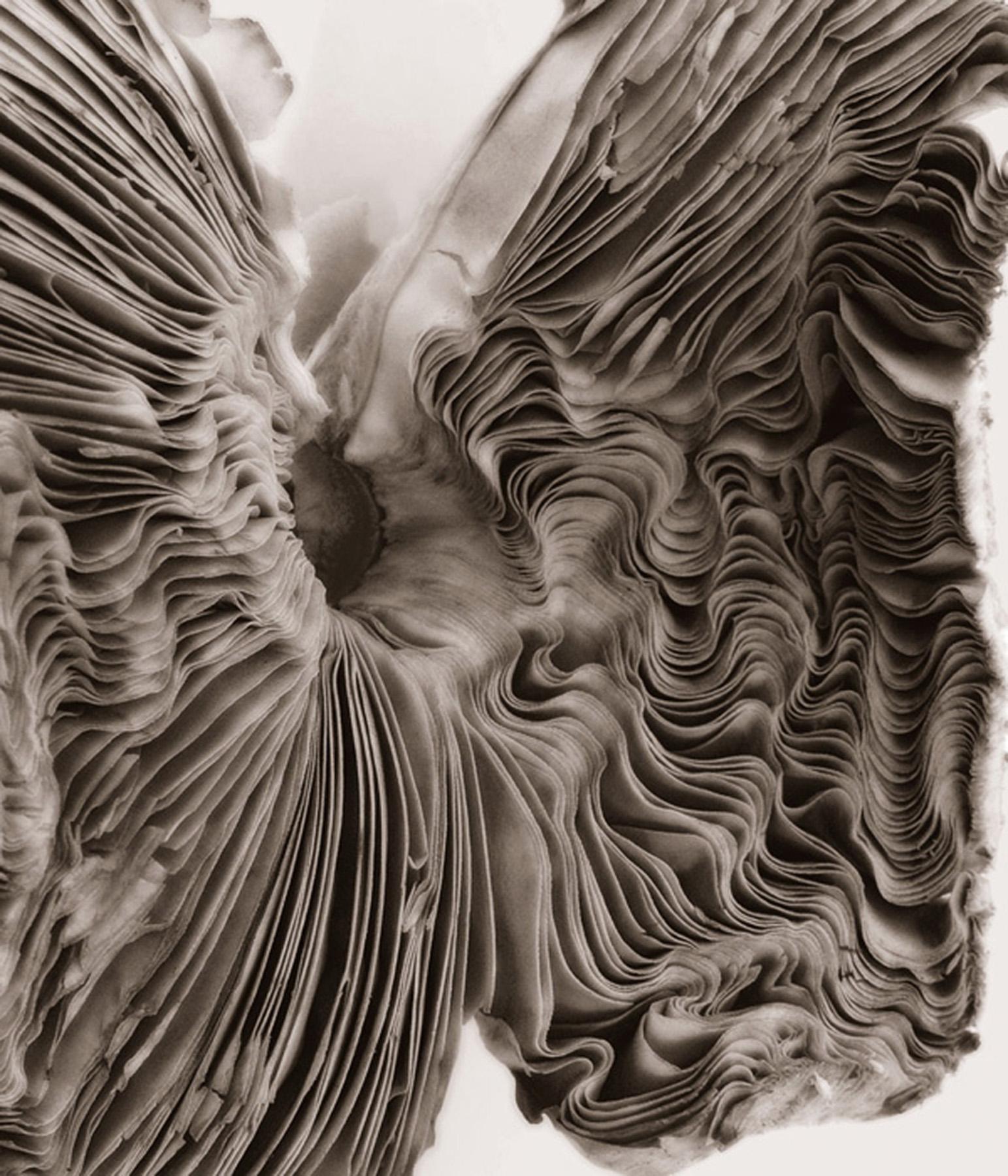 ©HelenJones-Pleated Underbelly.jpg