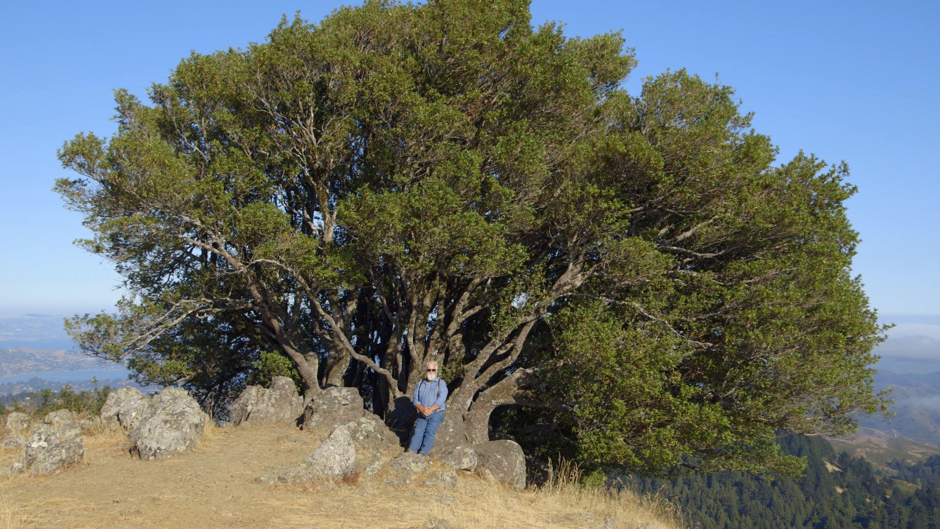 Rod and tree.jpg