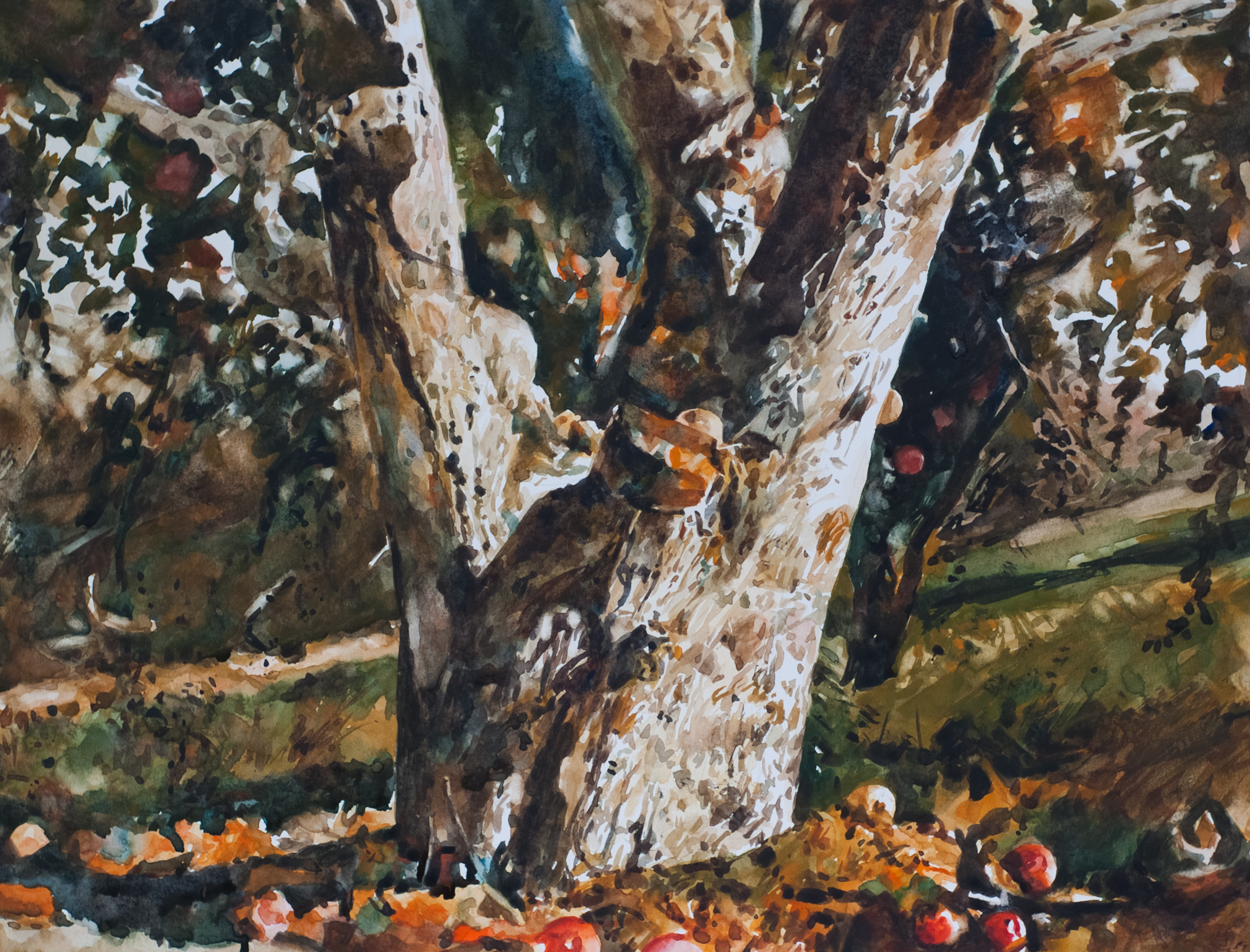 Wyeth's apple tree