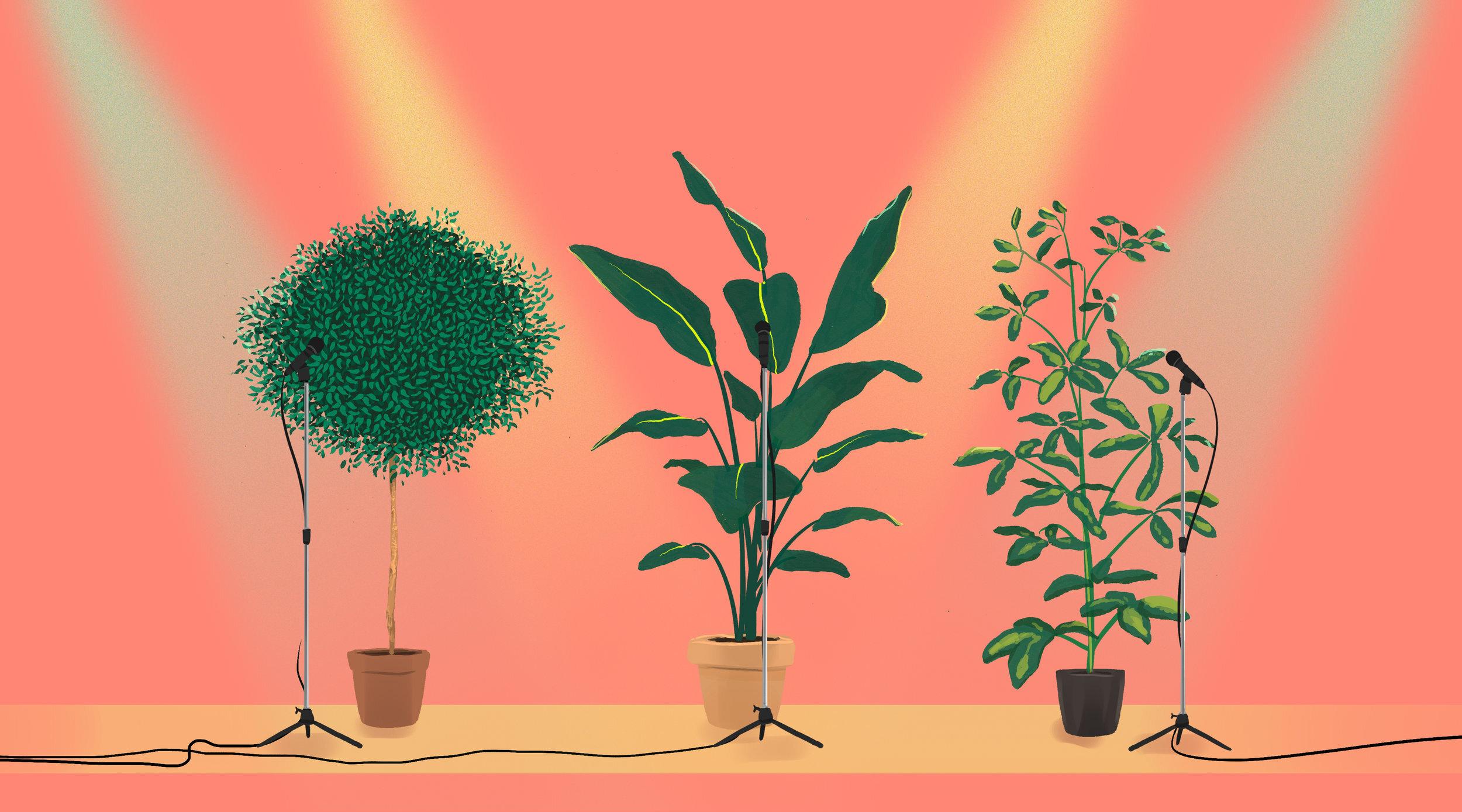 Plants_website_no_text.jpg