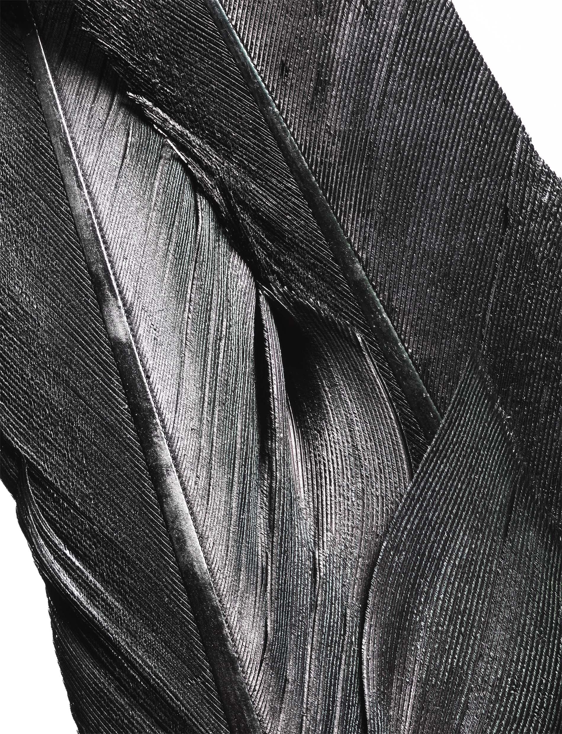 01,feather_01_N02.jpg
