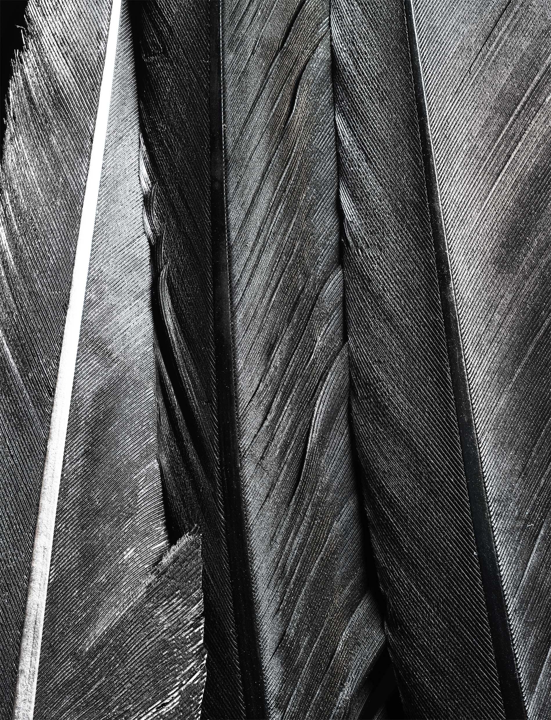 03,feather_03_N02.jpg