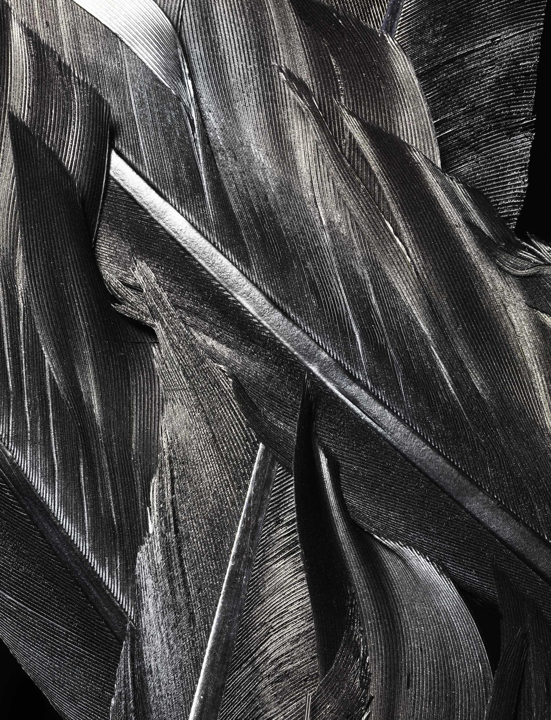 feather_01.jpg