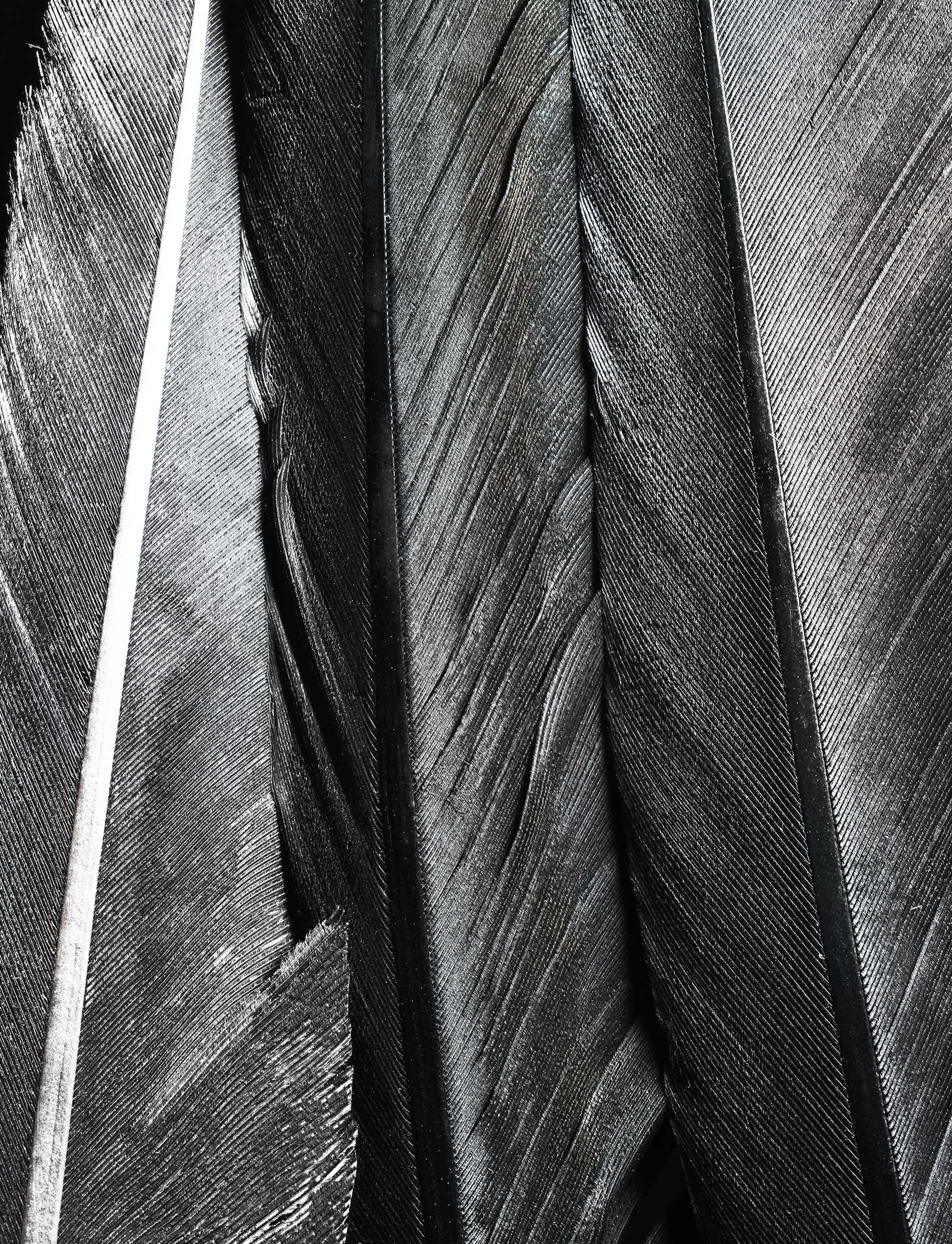 feather_03.jpg