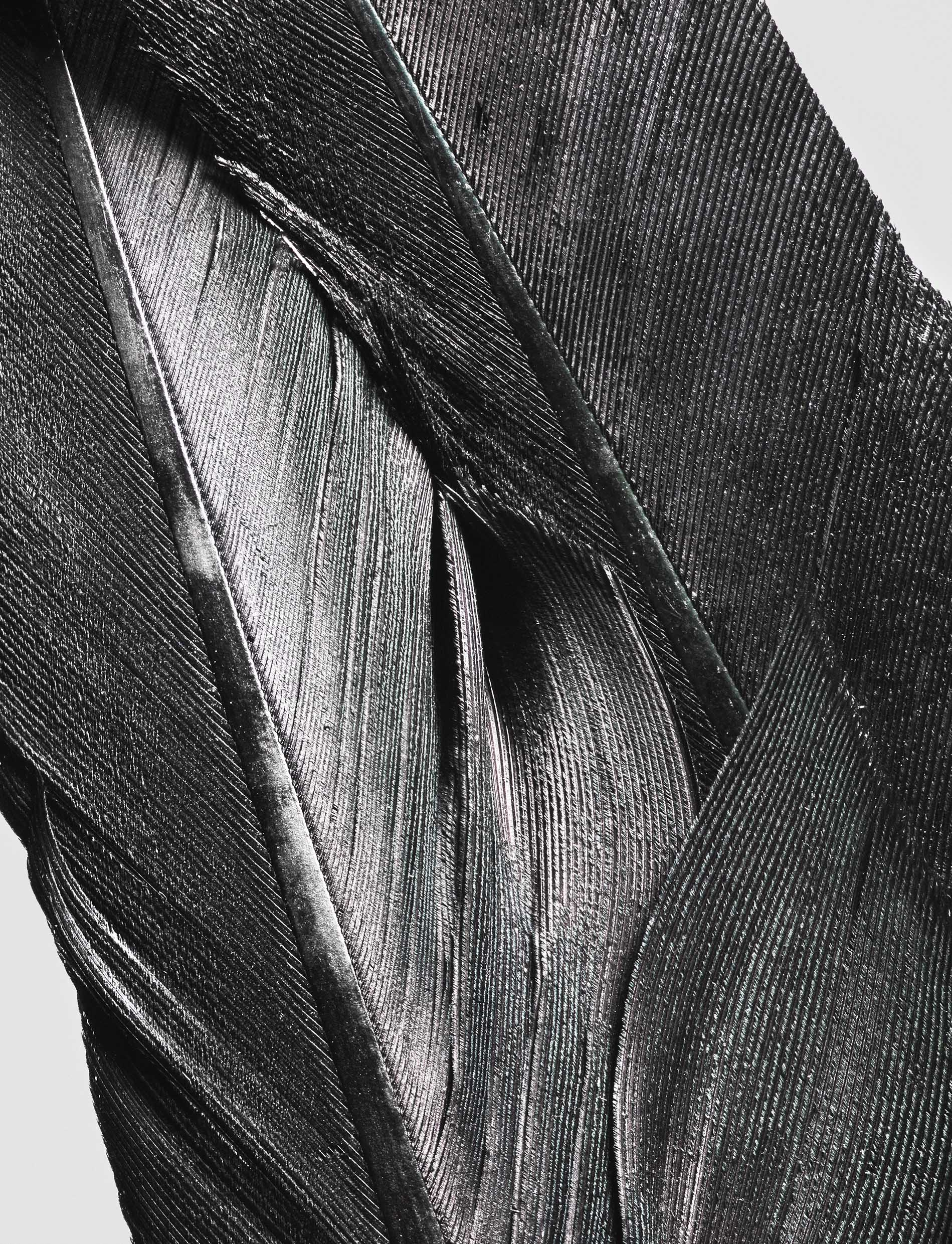 feather_04.jpg