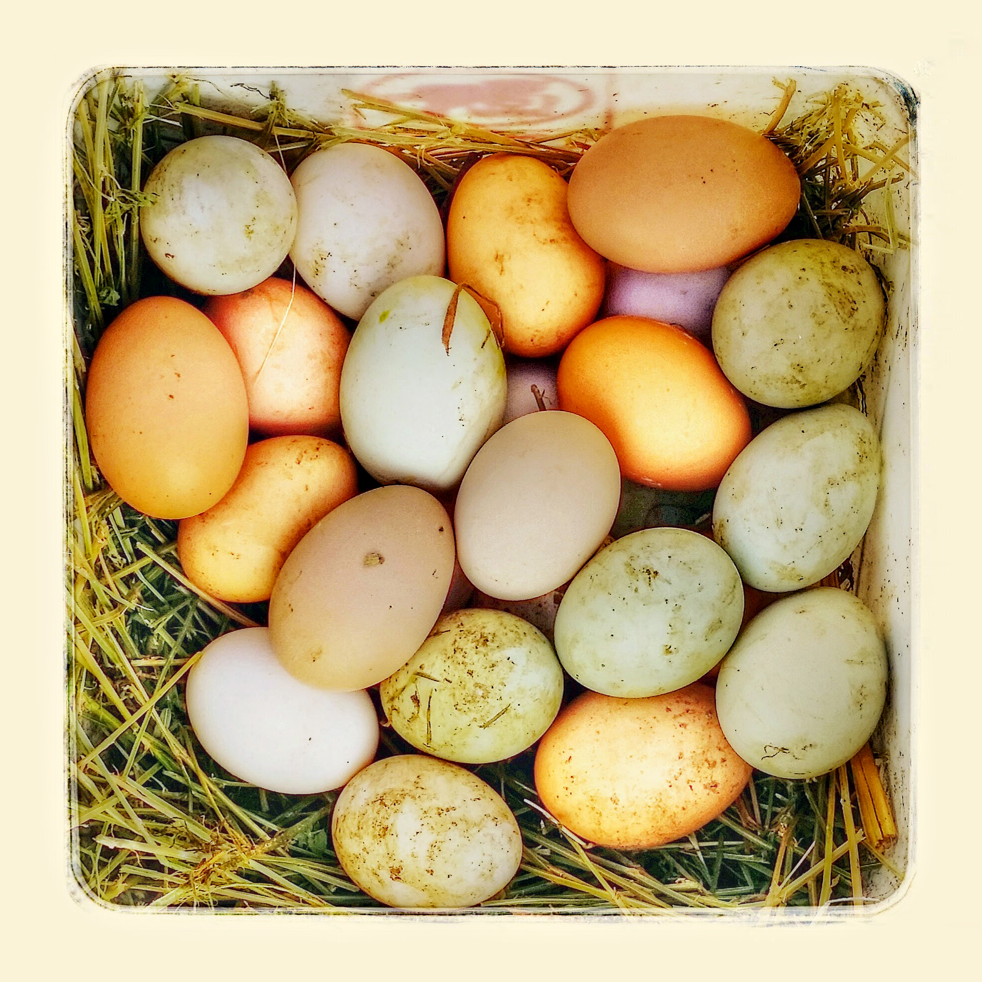 eggs_after.jpg