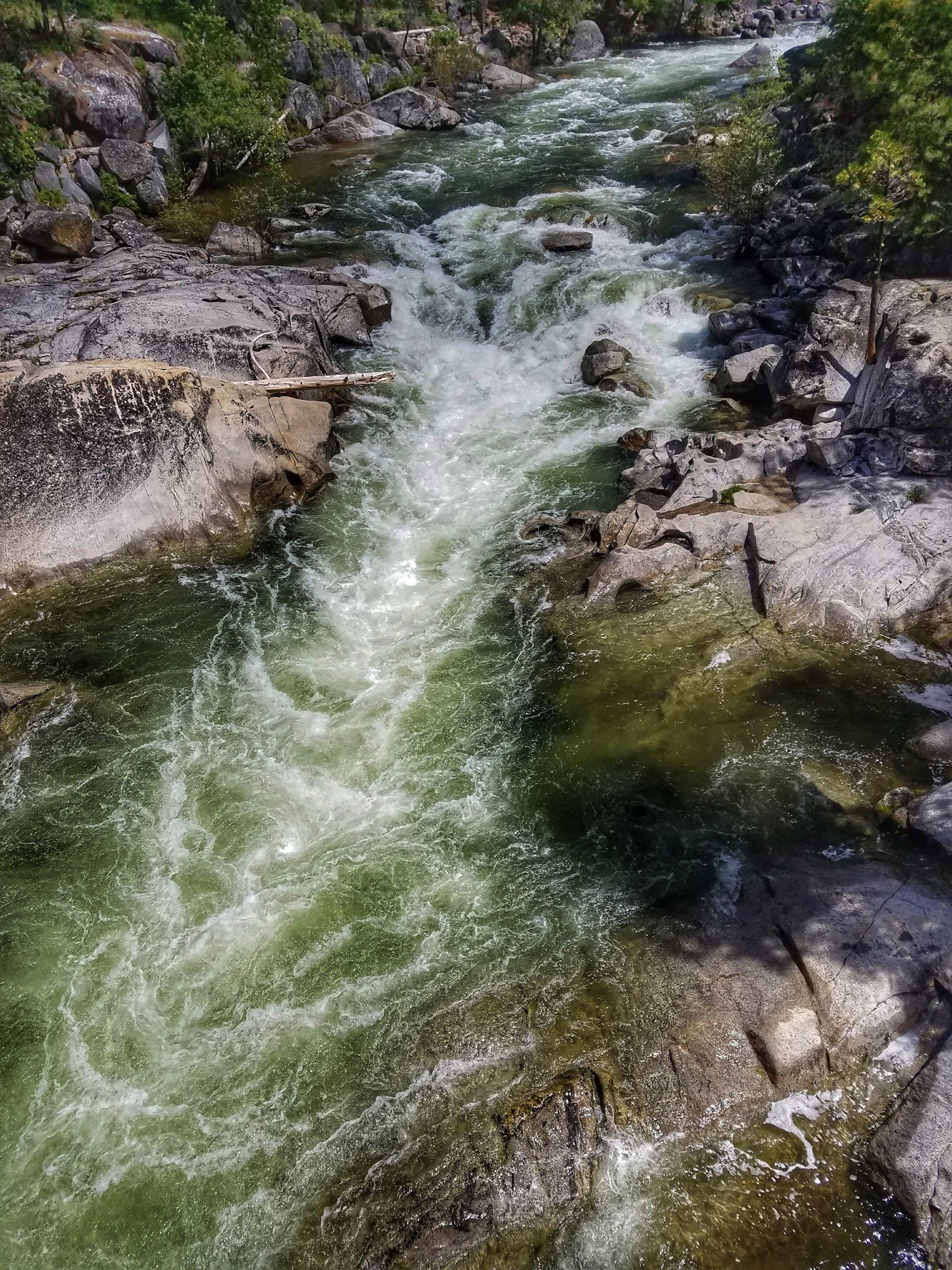 big tree river.jpeg