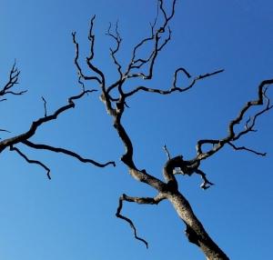 tree_crop.jpg
